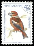Hawfinch. Bulgaria - stamp printed in1987, Memorable issue Fauna, Series Birds, Hawfinch, Coccothraustes coccothraustes Royalty Free Stock Image