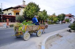 Bulgaria, Mode of Transport. Bulgaria, unidentified peasant on his donkey cart laden with corn harvest in the Village Kulata, border town to Greece stock image