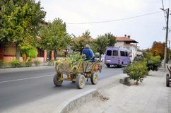 Bulgaria, Mode of Transport. Bulgaria, unidentified peasant on his donkey cart laden with corn harvest in the Village Kulata, border town to Greece stock photo
