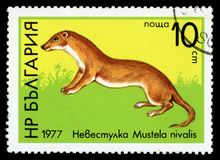 Bulgaria `Wildlife` series postage stamp, 1977. BULGARIA - CIRCA 1977: A stamp printed by Bulgaria shows image of a Least Weasel, Wildlife series, circa 1977 Royalty Free Stock Image