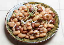 Bulgarian beans salad Stock Images