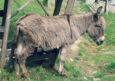A Bulgarian Donkey Royalty Free Stock Photography