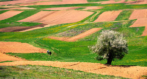 Bulgarian farmland Stock Images