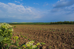 Bulgarian fields. Situated near the town of Silistra. They create a sense of endlessness and soothe and fill the eye with its beauty and color Royalty Free Stock Photography