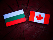Bulgarian flag with Canadian flag on a tree stump isolated Stock Image