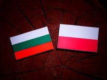 Bulgarian flag with Polish flag on a tree stump isolated. Bulgarian flag with Polish flag on a tree stump vector illustration