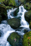 Bulgarian forest stream Stock Images