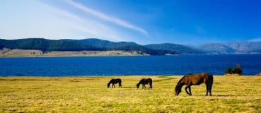 Bulgarian horse landscape. With lake Royalty Free Stock Image