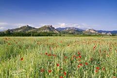 bulgarian natur Arkivfoto