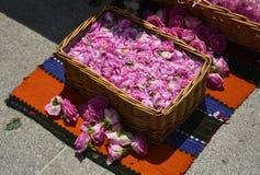 Bulgarian oil rose in Bulgaria Stock Image