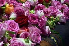 Bulgarian oil rose in Bulgaria. Bulgarian oil rose in Sofia, Bulgaria Stock Image