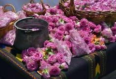 Bulgarian oil rose in Bulgaria Stock Images