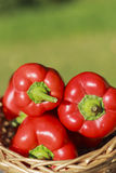 Bulgarian pepper (paprika). On blurred green background royalty free stock photos