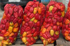 Bulgarian sweet pepper in a red grid is on the street for sale. The market in Russia. stock image
