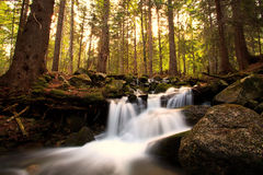 Bulgarian wild nature forest Royalty Free Stock Photos