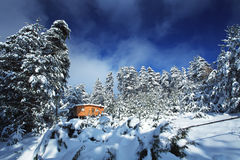 Bulgarian winter forest Stock Images