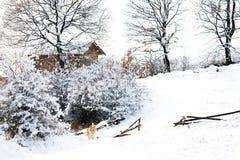 Bulgarian winter meadows Stock Photos