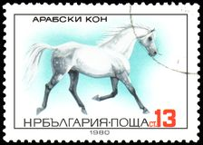 BULGARIEN - CIRCA 1980: en stämpel som skrivs ut i Bulgarien, visar en arabisk häst stock illustrationer
