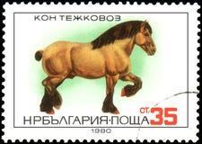 BULGARIEN - CIRCA 1980: en stämpel som skrivs ut i Bulgarien, visar en tung häst royaltyfri illustrationer