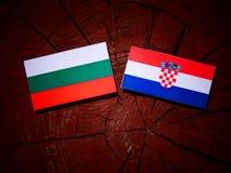 Bulgarisk flagga med den kroatiska flaggan på en isolerad trädstubbe Royaltyfria Bilder