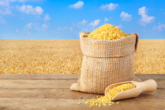 Bulgur im Sack mit Feld des Weizens auf dem Hintergrund Lizenzfreie Stockbilder