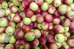 Bulk Apples in Bin. Red and green bulk apples in commercial bin royalty free stock photography