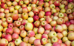 Bulk Apples. Lots of apples in bulk in the market stock images