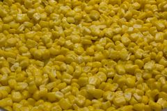 Bulk of boiled yellow corn grains texture stock photo