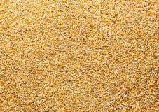 Bulk of corn Royalty Free Stock Photography