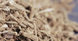 Valerian medicinal bulk. Bulk dried apothecary valerian gray stock footage