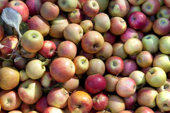 Bulk Fresh Apples Stock Photo
