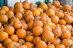 Bulk of pumpkin stock photo