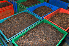 Bulk tea in boxes. On the tea factory Stock Image
