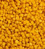 Bulk of yellow corn grains stock photography