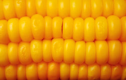 Corn on the cob close up Royalty Free Stock Photo