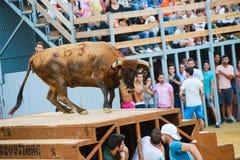 Bull από οι γενναίοι νεαροί άνδρες που πειράζει στο χώρο μετά από τους τρέχω-με-ο-ταύρους στις οδούς Denia, Ισπανία στοκ εικόνες