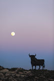 Bull και φεγγάρι Στοκ Εικόνα