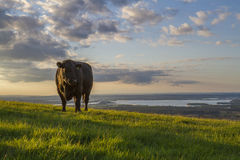Bull με μια φανταστική άποψη Στοκ Εικόνες