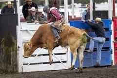 Bull που πηδά ψηλά Στοκ Εικόνες