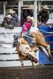 Bull που στρίβει γύρω Στοκ φωτογραφίες με δικαίωμα ελεύθερης χρήσης