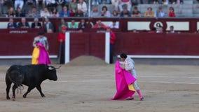 Bull στην περιτύλιξη απόθεμα βίντεο