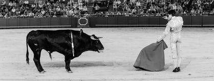 Bull στο σημείο της δολοφονίας στοκ εικόνες