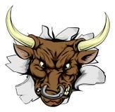 Bull поручая через стену Стоковая Фотография