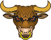 Bull. This is an image of an angry bull Stock Photo