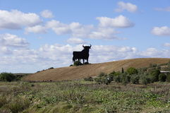 Bull Image stock
