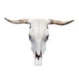 Череп Bull Стоковое Изображение RF