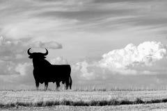 Bull Fotografie Stock