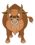 Bull. The bull with a ring in nostrils Stock Photo