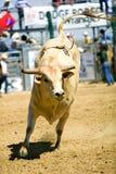 Bull imagem de stock royalty free