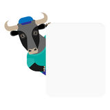 Bull banner Royalty Free Stock Images